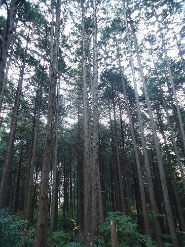 1411dainohara005.jpg