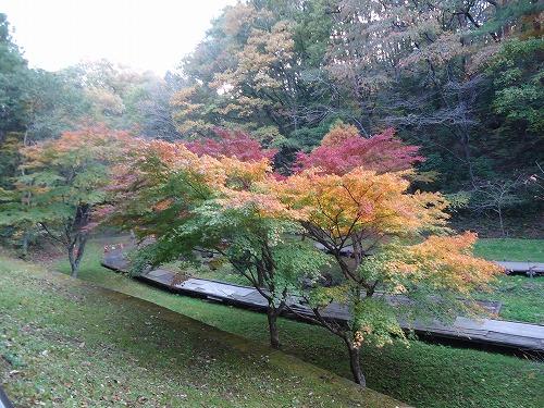 1411dainohara012.jpg