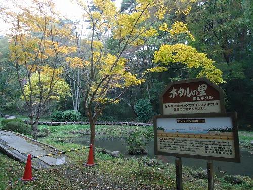 1411dainohara013.jpg