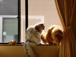 猫2匹_copy