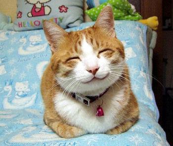 癒し猫_copy