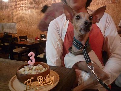 ビスちゃん/BirthdayGirl