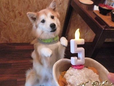 むぎチャン/Birthday Girl