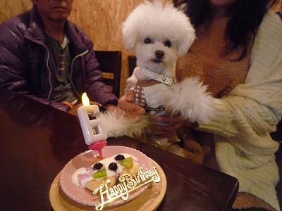 ログくん/Birthday Boy