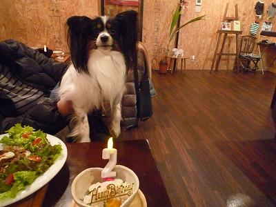 ロンくん/Birthday Boy