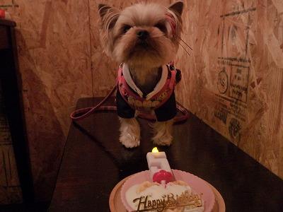 キャンディちゃん/Birthday Girl