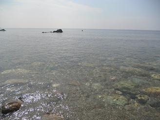 0812suzu1.jpg