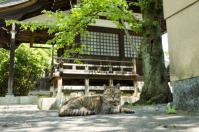 寺と猫と木漏れ日_081