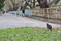 名古屋城前の猫