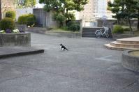 図書館前猫