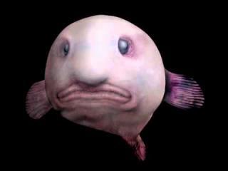 WSzrglrsかわいい魚