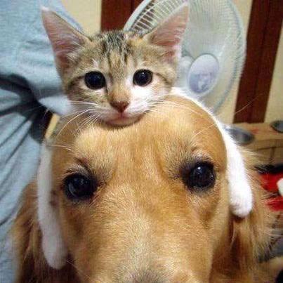 553276_223525301126260_949719868_n猫と犬