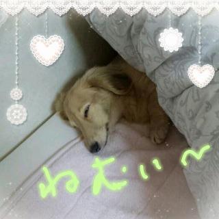 ぱふぃ眠い