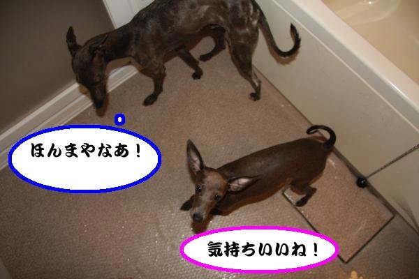 IMG_0397-1_convert_20120808220751.jpg