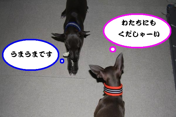 IMG_0515-1_convert_20120811225653.jpg
