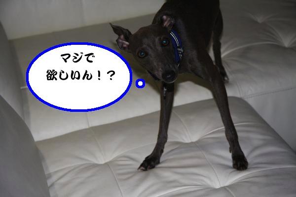 IMG_0523-1convert_20120811230330.jpg