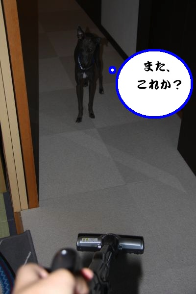IMG_0837-1_convert_20120817220818.jpg