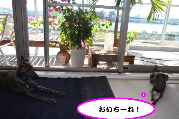 IMG_0992-1_convert_20120819223649.jpg