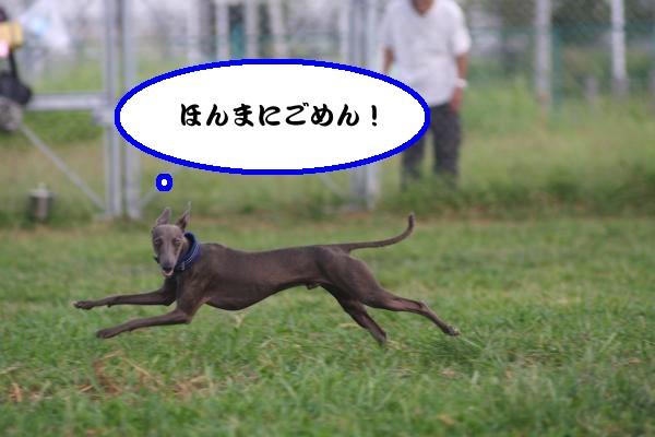 IMG_1306-1_convert_20120822185949.jpg