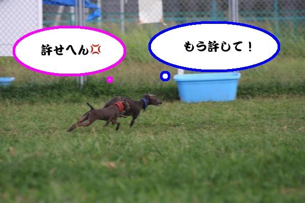 IMG_1307-1_convert_20120822190021.jpg