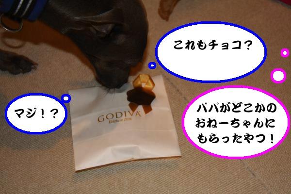IMG_1343-1_convert_20130214220451.jpg