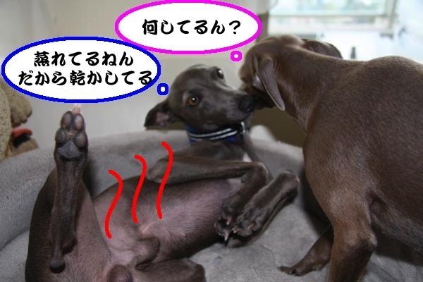 IMG_1402-2_convert_20130216220736.jpg