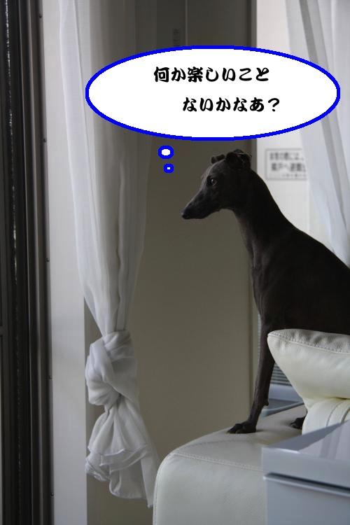 IMG_2239-1_convert_20120904211930.jpg