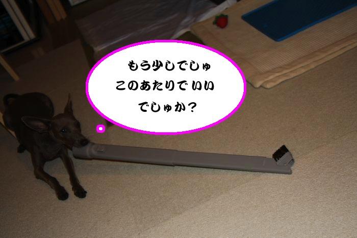 IMG_2344-1_convert_20120906220203.jpg