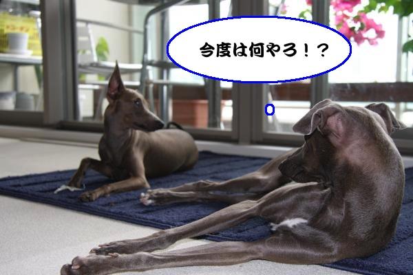 IMG_2754-1_convert_20120911231234.jpg