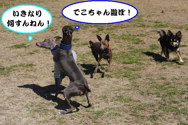 IMG_3156-1_convert_20130311204612.jpg
