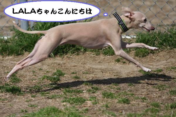 IMG_3574-1_convert_20130319185110.jpg
