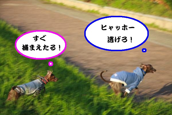 IMG_4718-1_convert_20121013084322.jpg