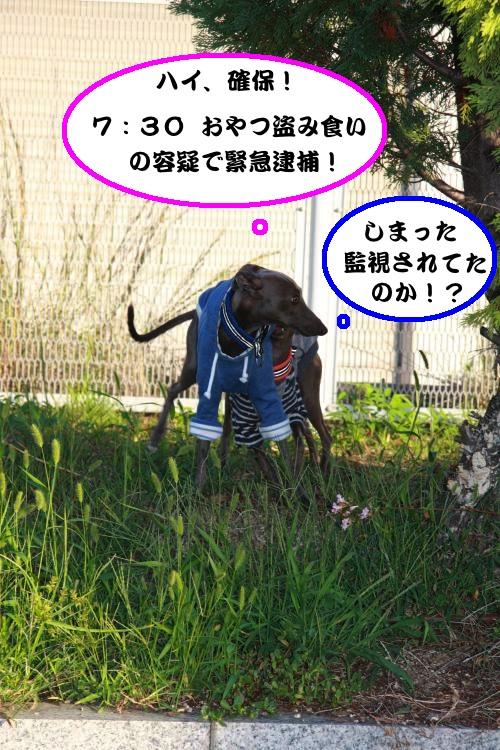 IMG_4722-1_convert_20121013084530.jpg