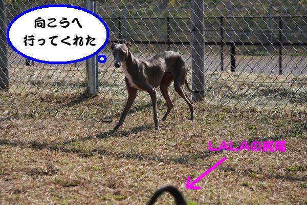 IMG_5621-1_convert_20121026223049.jpg