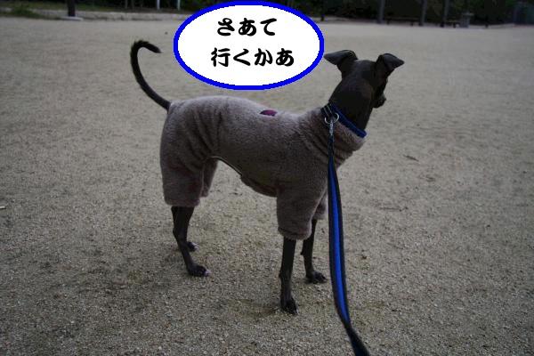 IMG_6449-1_convert_20121113225355.jpg