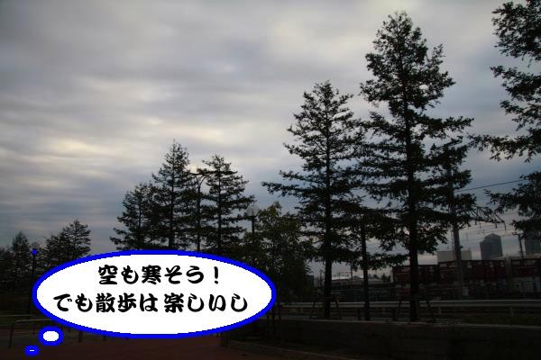 IMG_6454-1_convert_20121113225449.jpg