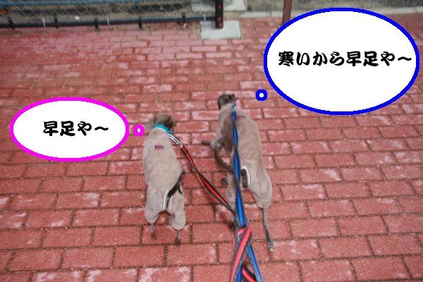 IMG_6456-1_convert_20121113225532.jpg