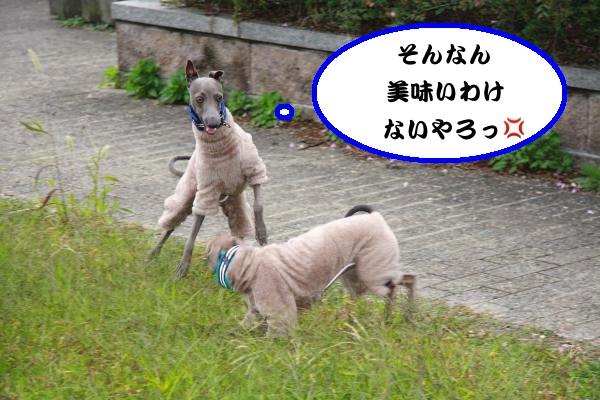 IMG_6490-1_convert_20121113230651.jpg