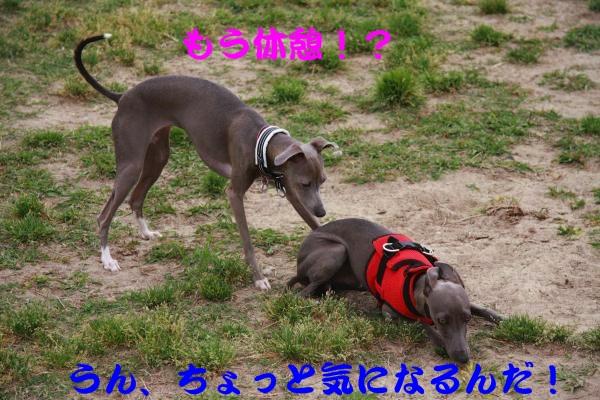 IMG_6609-1_convert_20120522213908.jpg