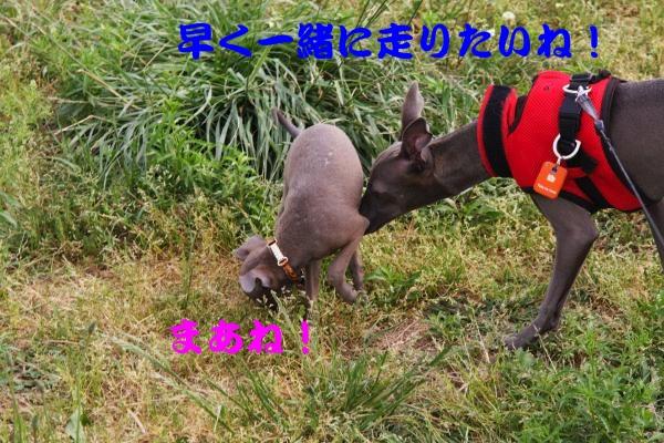 IMG_6643-1_convert_20120522223848.jpg