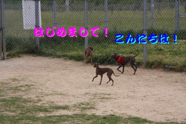 IMG_6732-1_convert_20120524211232.jpg