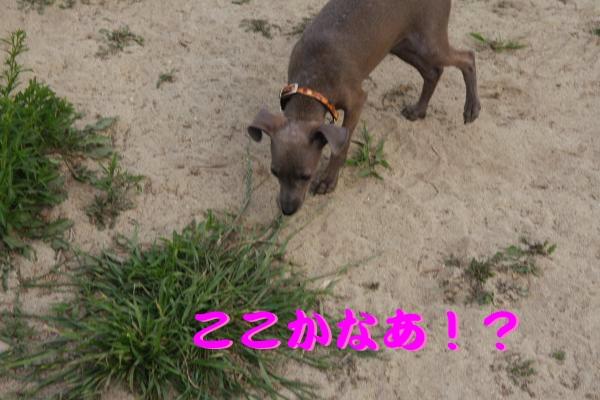 IMG_6746-1_convert_20120524220035.jpg