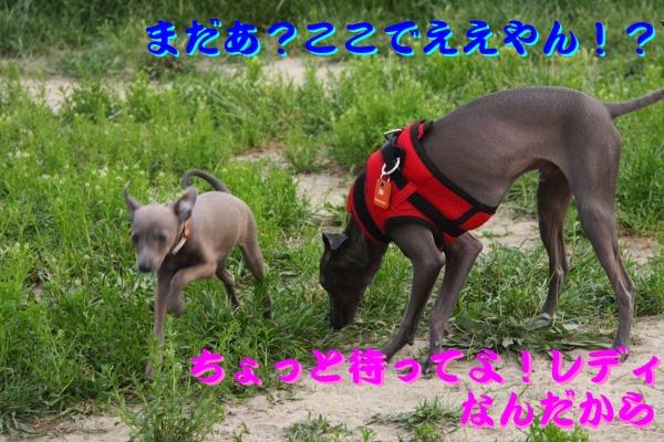 IMG_6751-1_convert_20120524220306.jpg