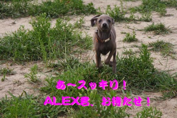IMG_6754-1_convert_20120524221903.jpg