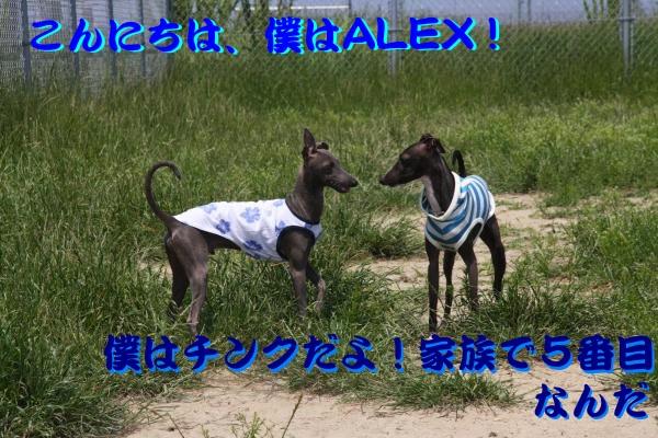 IMG_6770-1_convert_20120527210731.jpg