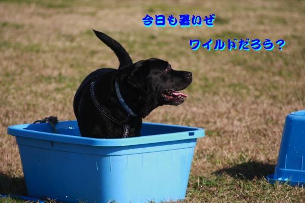 IMG_6824-1_convert_20121121230539.jpg