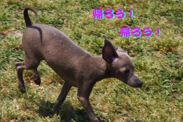 IMG_6853-1_convert_20120528194146.jpg