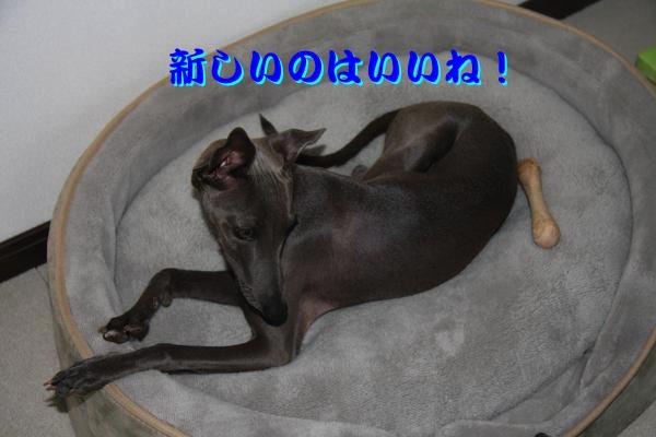IMG_6858_-1convert_20120528213606.jpg