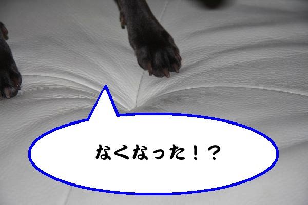 IMG_7091-1_convert_20120603222555.jpg