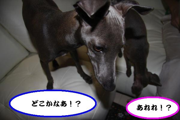 IMG_7093-1_convert_20120603222732.jpg
